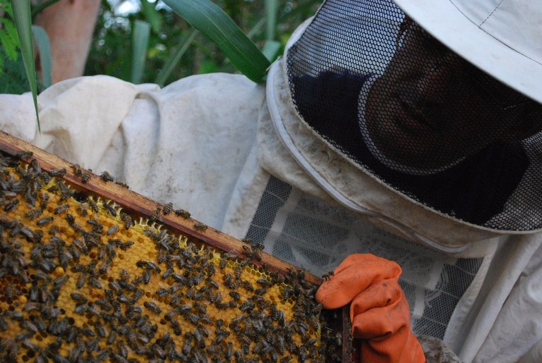 Bom Jesus - apicultura