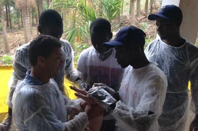 Suinocultura - Moçambicanos