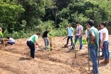 Alunos plantaram banana, cenoura, beterraba, alface, Gliricidia, entre outras espécies.
