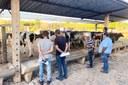 I Leilão de Gado de Leite do IFF Bom Jesus realiza alienação de 33 animais