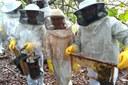 Curso de Boas práticas na colheita e beneficiamento de mel