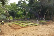 Alunos do campus participam da instalação e acompanhamento da produtividade da horta 100 % orgânica.