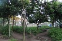IFF Campos Guarus abre chamada pública para comprar mais de 100 toneladas em alimentos