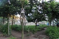 Horta Orgânica do IFF Campos Guarus. (Foto: Leonardo Lemos)