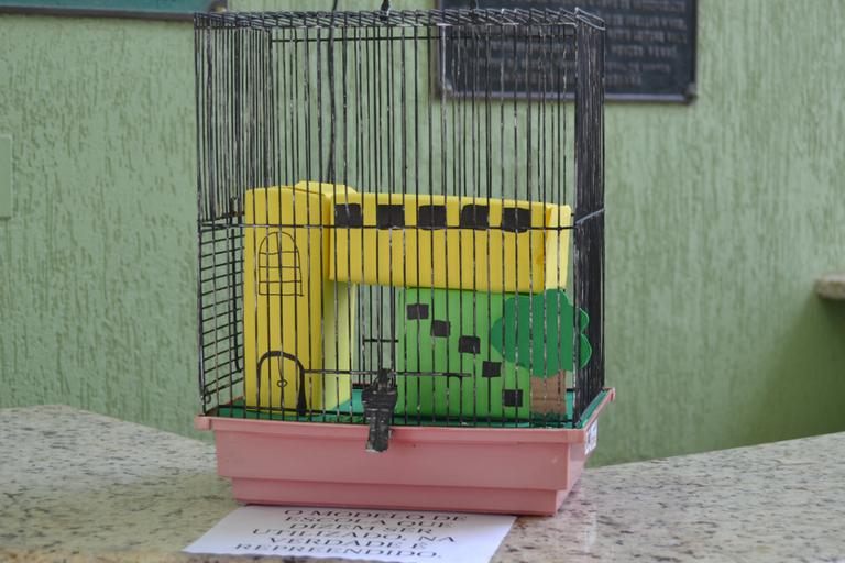 Exposição gaiolas e asas